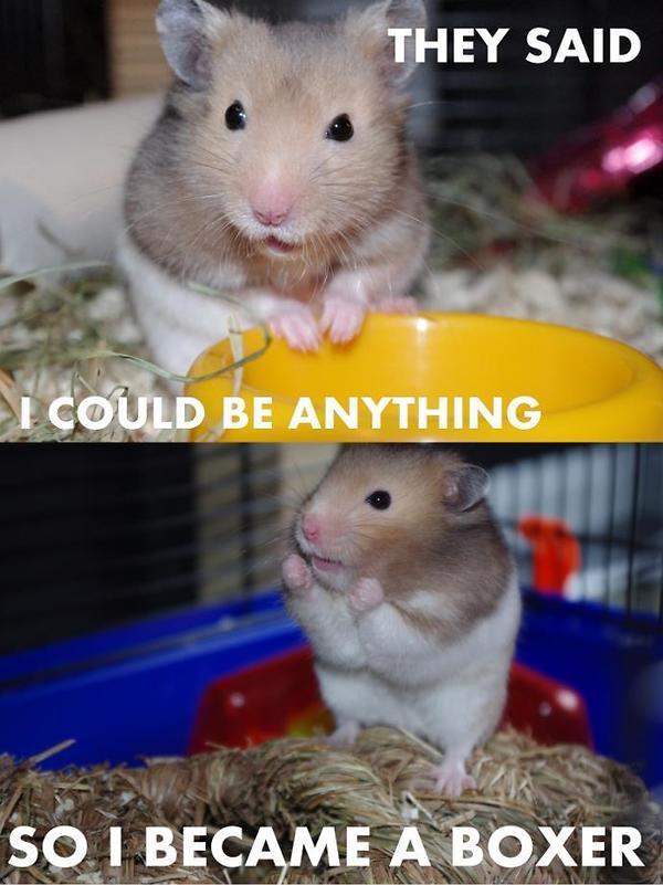 [Image: 1354201372-Angry-hamster.jpg]